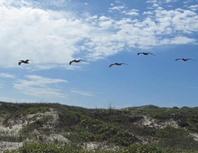 cropped-pelicans-in-flight.jpg