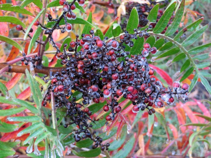 cropped-colorful-sumac.jpg