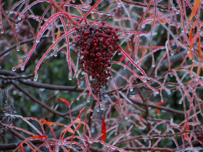 Sumac berries in ice