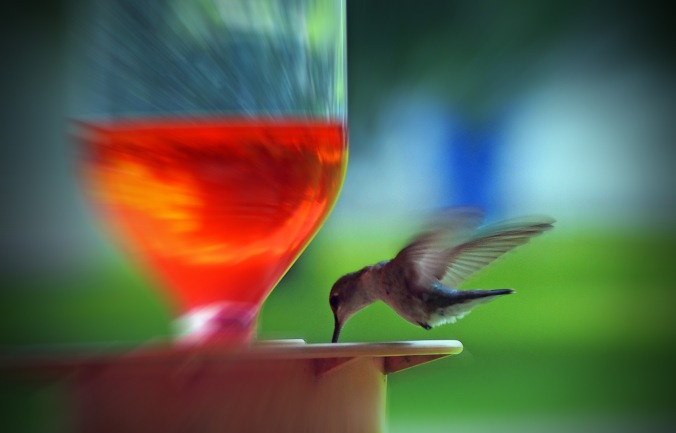 Hummingbird feeding with effects.
