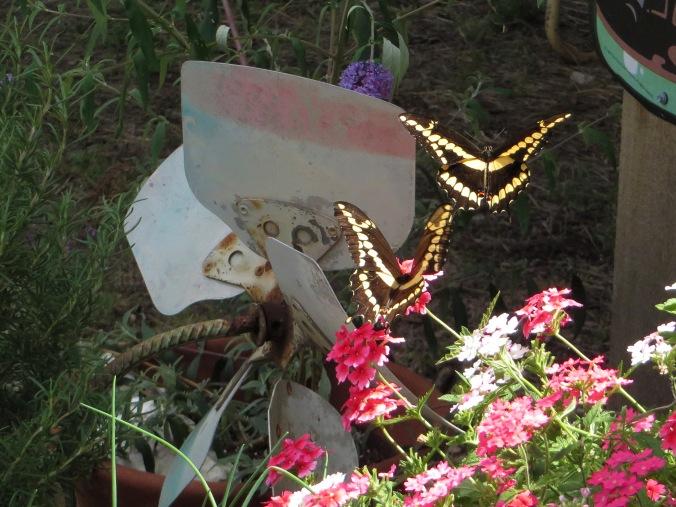 two butterflies near soda sign IMG_7248