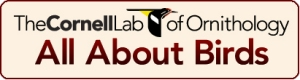 cornell_lab_or_ornithology_button