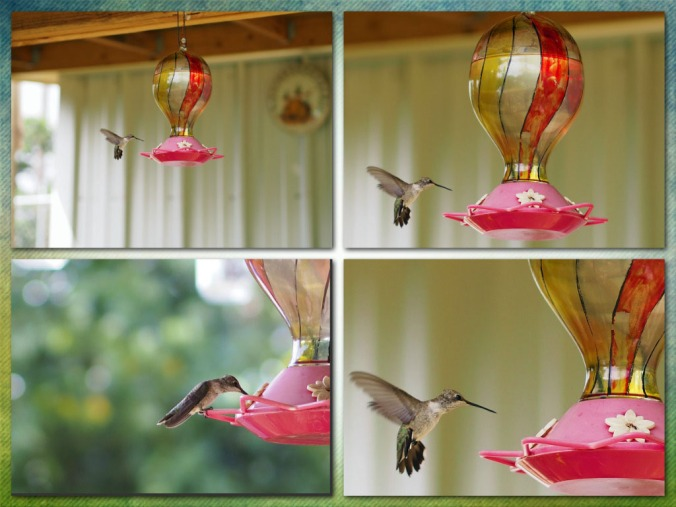 Hummingbird photo collage