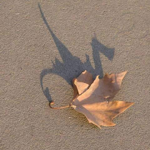 Fall dragon leaf shadow