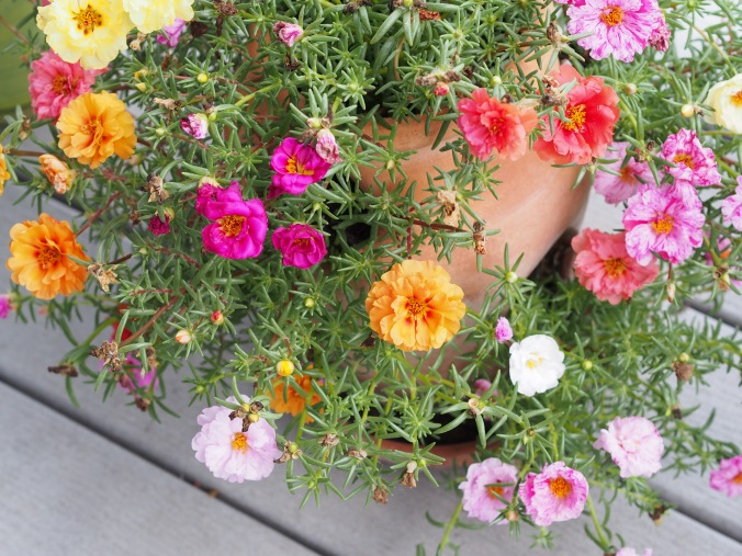 Strawberry planter filled with moss rose
