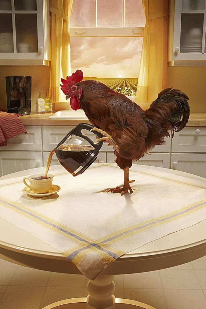 Rooster Pouring Coffee
