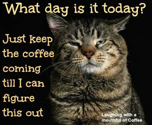 what-day-is-today-cat-coffee-laughing-with-a-mouthful-of-coffee