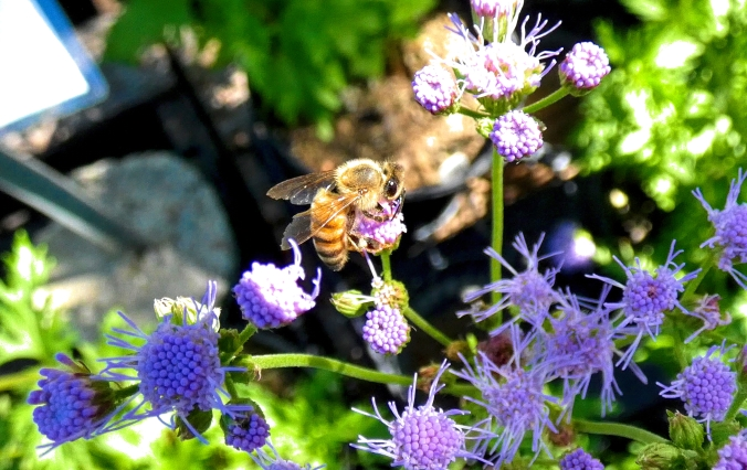 Bee Dramatic contrast and color 2